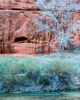 Sandstone, Tree, and the Virgin River