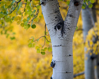 Colorado Fall - 2015